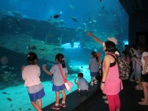 Outing at Sea Aquarium, Sentosa